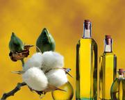 Продаем для экспорта хлопкового масла из Туркменистана